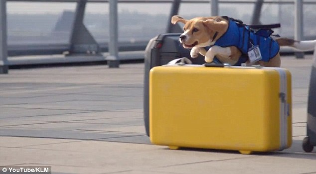 Image Credit: KLM Lost & Found Service, YouTube
