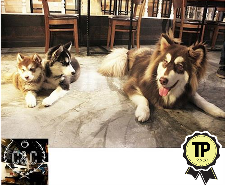 malaysias-top-10-pet-friendly-cafes-cubs-and-cups