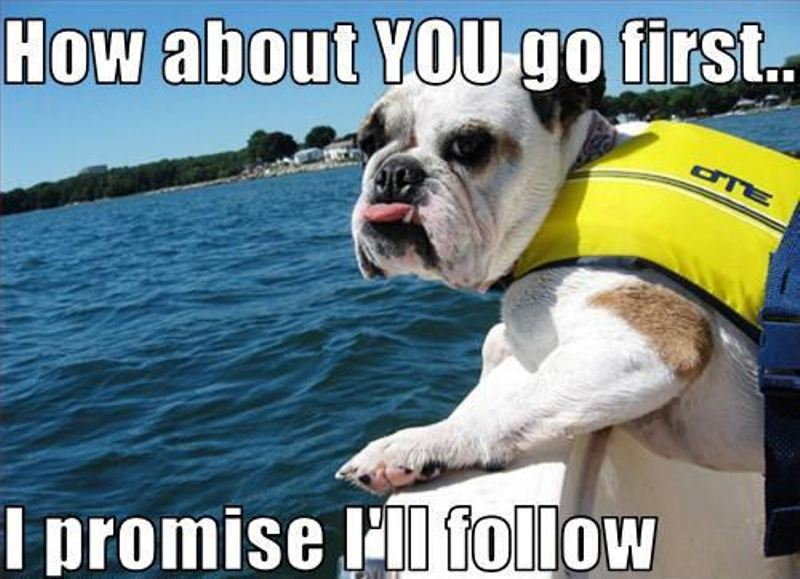 How-about-YOU-go-first-I-promise-I-ll-follow-dogs-11954378-500-362
