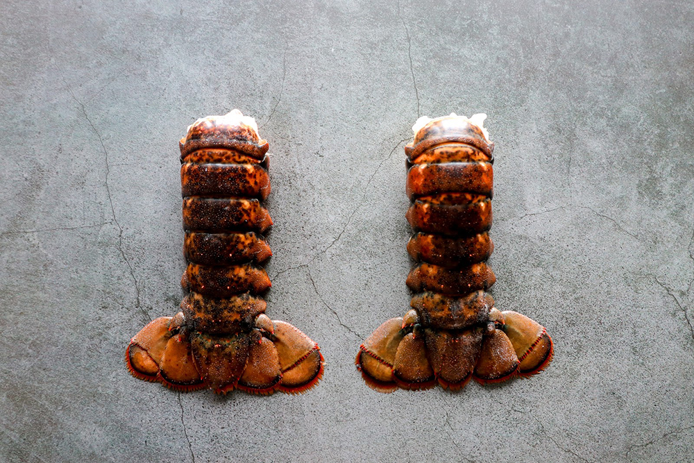 Wild Bosten lobster tail, 9s Seafood