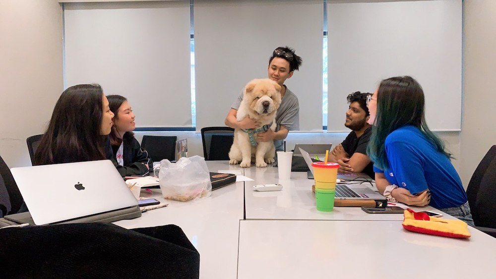 The Woof Agency pet influencer
