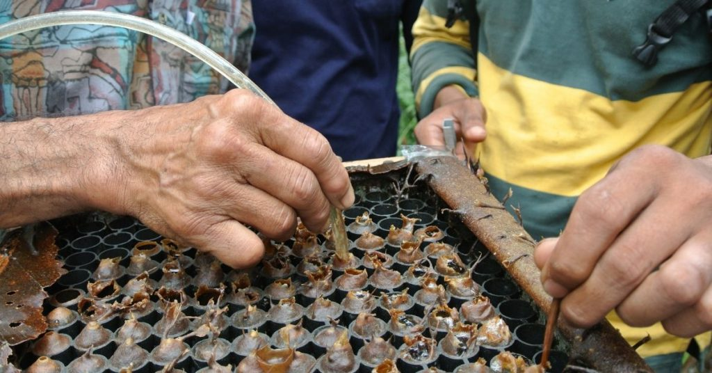 Malaysia's Stingless Bees That Many Locals Don't Know About Could Bring In RM3bil/Year