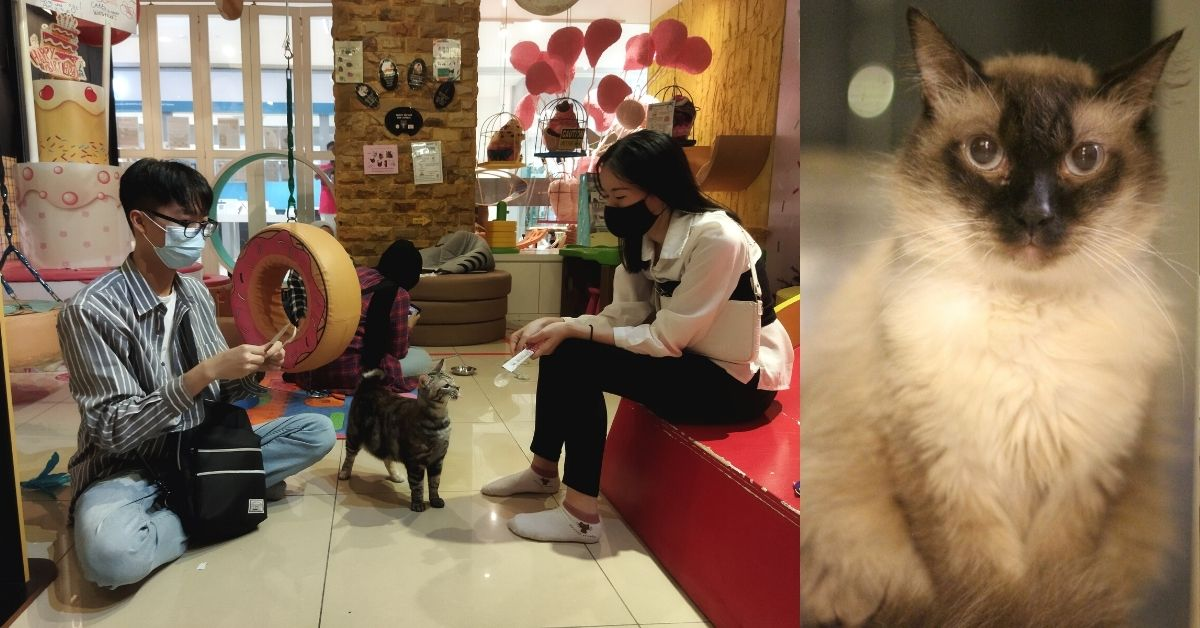 Cat therapy for autistic and special needs children