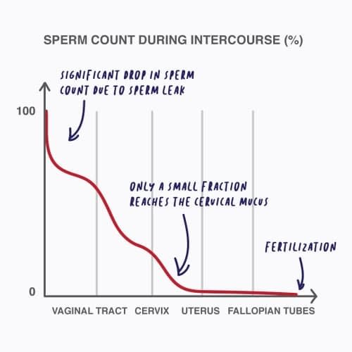 sperm count during intercourse